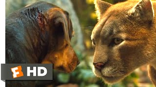 A Dog's Way Home (2018) - Big Kitten Returns Scene (7/10) | Movieclips