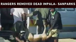 SANParks clarifies removal of impala after leopard kill