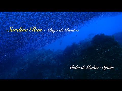 Sardine Run Cabo de Palos
