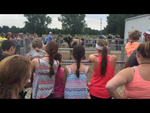 2016 American Milking Shorthorn Society Convention Tour at Select Sires