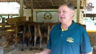 Granja Tenfen - Pequena propriedade de gado Jersey que é referência na pecuária leiteria do Brasil