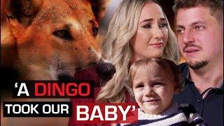 Wild dingo steals baby while parents sleep | 60 Minutes Australia