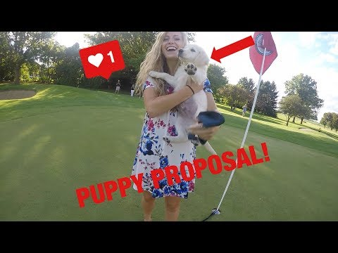 TRY NOT TO CRY AT THIS PUPPY PROPOSAL!!!