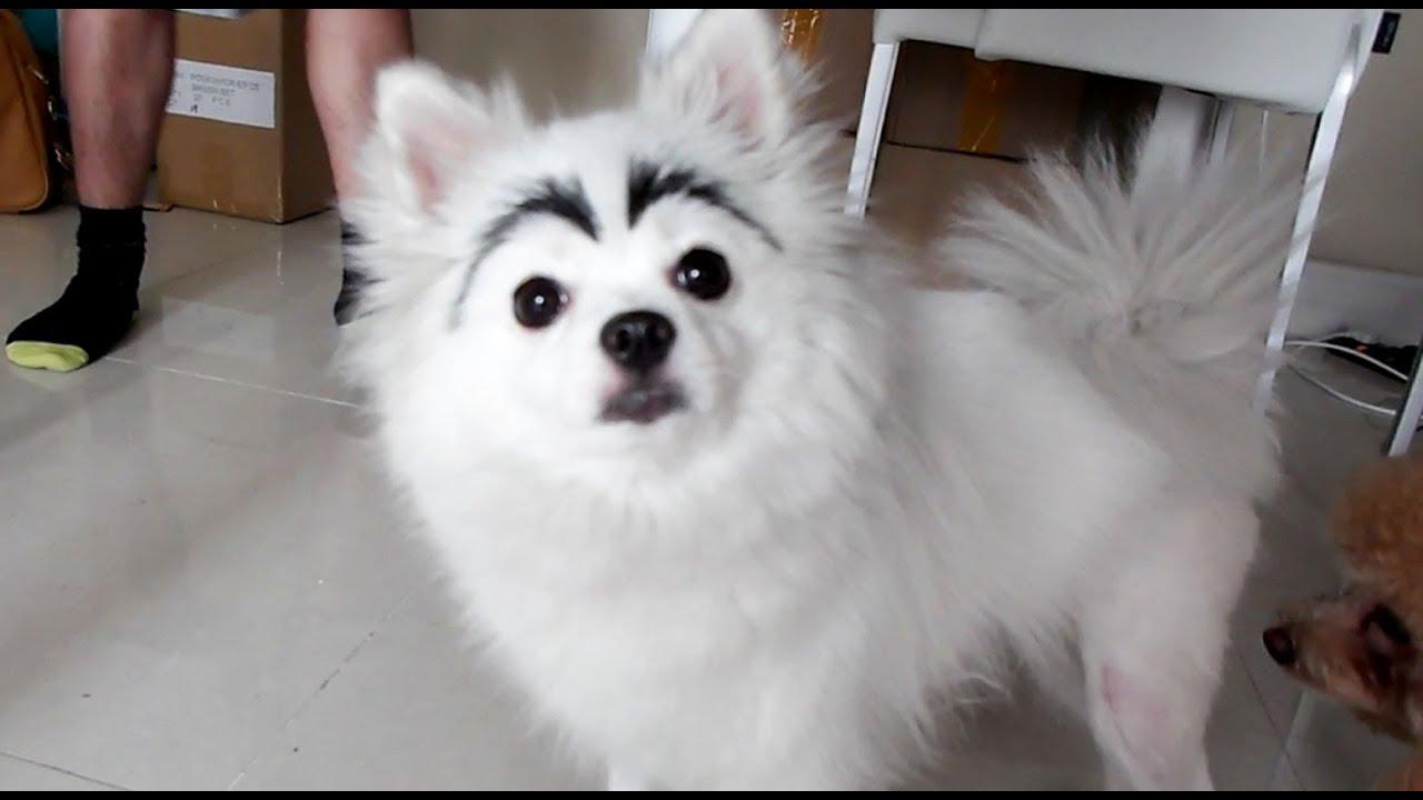 dog with eyebrows youtube