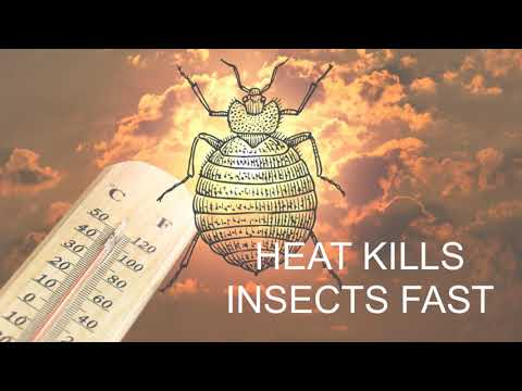 The Professionals at Empire Describe The Reason Heat Treatment Can Be So Great For Insects Such As Cockroaches