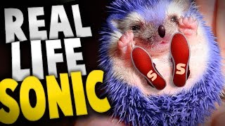 SANIC IN REAL LIFE!