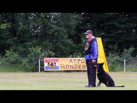 W Spies Ayse v  Hamersslag Obedience  (IPO1) 90 P.