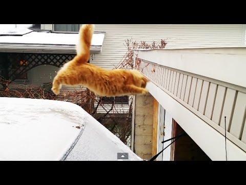 Epic file Gatto non riesce a saltare per colpa della neve