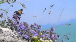 Minuet - Luigi Boccherini - String Quintet in E Major, Op.11 No.5