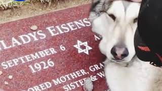 pet crying for it's  ,Owner who passed away.