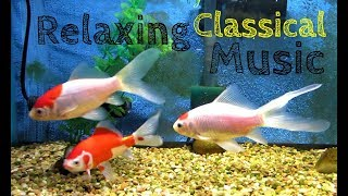 Relaxing sleep background Classical music live goldfish