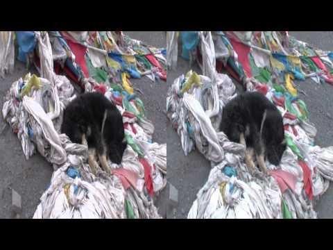 The Rest of Everest - Episode 156 3D