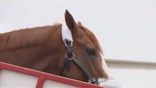 Justify arrives at the Louisville International Airport