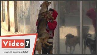 بالفيديو..سر الفتى الراقص مع الكلاب فى وسط البلد.     -