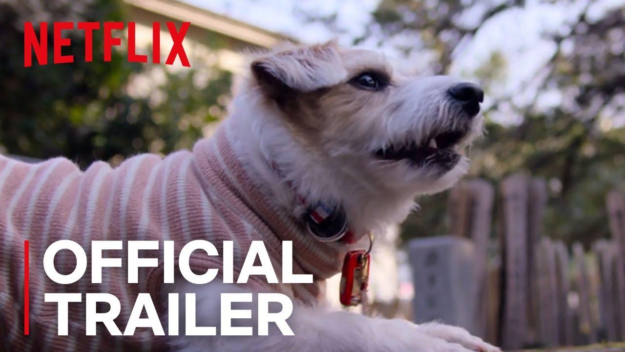 Trailer de Dogs
