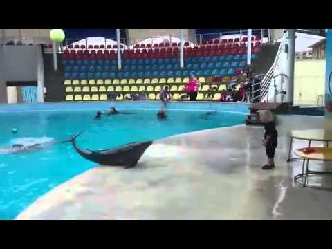 Delfin se igra s dečakom!