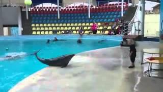 Мальчик играет с дельфином в мяч