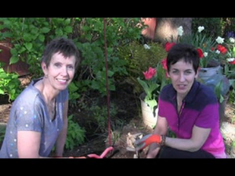 Episode 117-How to Plant Dahlia Tubers