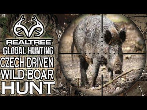 Prigonski lov na crnu divljač u Češkoj