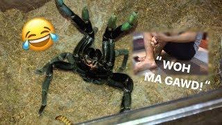 "Arachnophobic friend FEEDS my TARANTULAS for the FIRST TIME ~ ""Whoaa my goshhh!!!"""