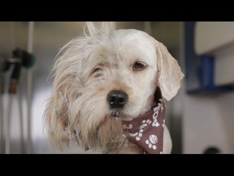 Преобразбата на бездомното куче Чарли која му го спаси животот