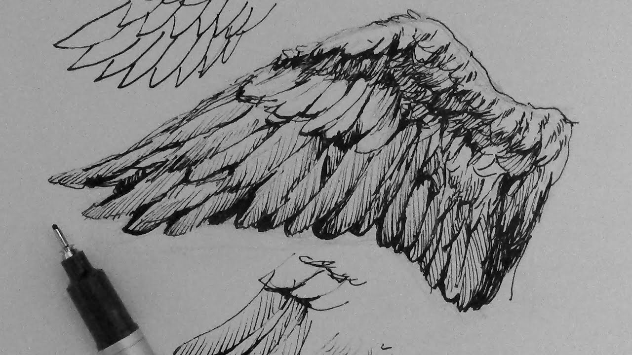 Pen Amp Ink Drawing Tutorials How To Draw Wings Youtube