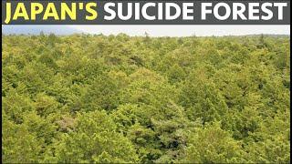 Japan's Suicide Forest.