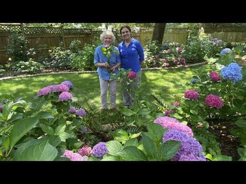 screenshot of youtube video titled Parrish Rabon's Garden