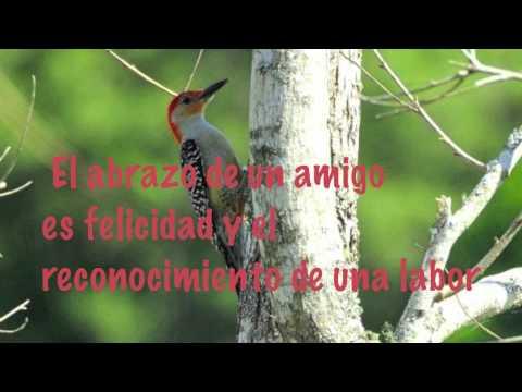 Poema de Amor y Amistad - Musica por John Sokoloff