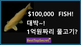 BestTopSecret(BTS-1) : The Most Beautiful Fish Group Dance In The World(#1)