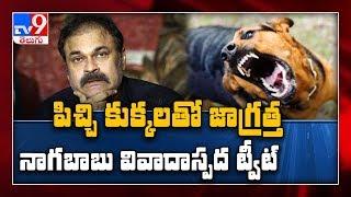 'Mad dogs' tweet from Naga Babu, is it aimed at Balakrishn..