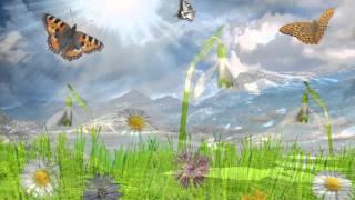 Những Hình Ảnh Tết -  Mùa Xuân Đẹp Nhất Làm Hình Nền