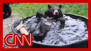 Bear taking bath in tub, video goes viral..