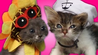 Kittens Try To Wear Tiny Hats