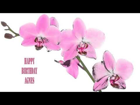 Agnes   Flowers & Flores