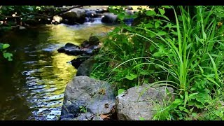 30 MINUTES Gentle Stream and Nature Sounds for Sleep, relaxation...