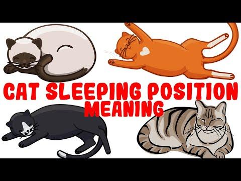Wat de slaaphouding van uw kat onthult over hun gezondheid en persoonlijkheid