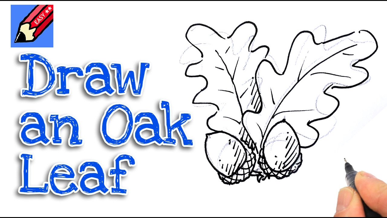 how to draw acorns amp oak leaves real easy spoken