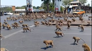 Monkey Swarm Takes Over City
