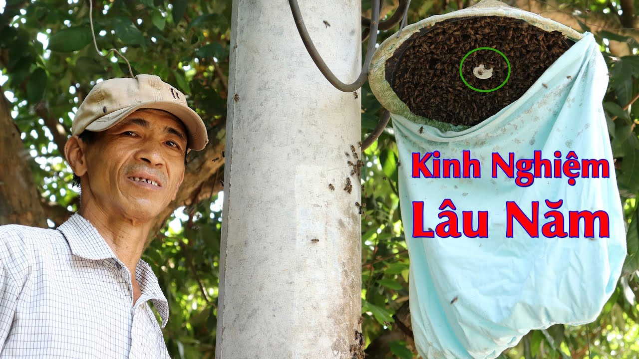 Kinh nghiệp bắt ong mật trong cột điện