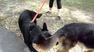 gsd training brisbane
