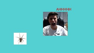 George Catches a Spider and Farts on Stream ft. Sapnap [Stream Highlights]