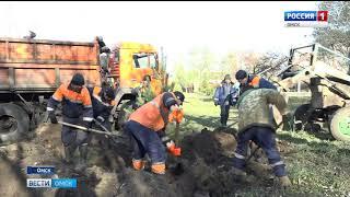 2500 деревьев и более 16000 кустарников будет высажено в Омске в нынешнем году