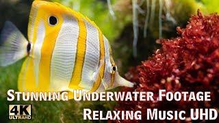 Stunning Underwater Footage + Relaxing Music UHD +Animals (Deniz Altındaki güzellik)