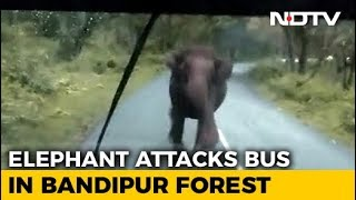 Panic Video : Elephant charges at Bus..