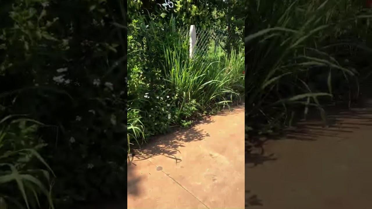 Bán 8 lô đất siêu đẹp ở khu vực Bàu Trâm thành thành phố Long Khánh tỉnh Đồng Nai video