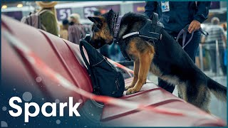What Happens If You Bring A Knife Into An Airport | The World's Best Airport: Changi | Spark