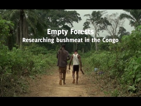 Empty Forests: Researching bushmeat in the Congo
