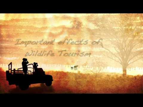 """""""Hoe duurzaam toerisme bijdraagt aan het behoud van de tijger"""" by TOFT"""