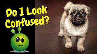 Dogs getting confused~Funny Dog Video~Animals Being Animals Series
